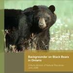 Backgrounder on Black Bears in Ontario