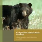 Backgrounder on Black Bears in Ontario