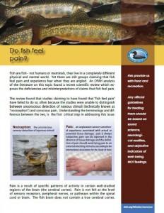 do fish feel pain