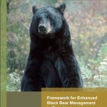 Framework for Enhanced Black Bear Management in Ontario