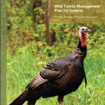 Wild Turkey Management Plan for Ontario 2007