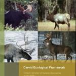 Cervid Ecological Framework