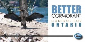 better cormorant control in ONtario